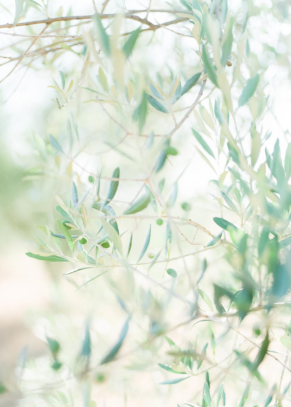 anouschka rokebrand, fine art marriage, provence france anniversary, olive tree